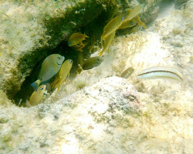 High Angle View Of Fish Swimming In Sea By Rocks