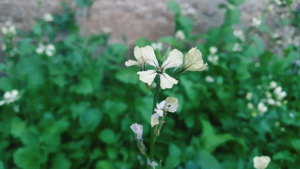 White Small White Flower 🌷 Flowers 🌹 ❤❤ Beautiful 🌸Nature🌸 Beautiful Flowers 🌸 Beautiful Nature Nature Collection Nature Photography 🌼flowers🌼 🌸 Nature 🌼🌼 Flower 🌺🌹🌷flower White Color 🌹 🌹🌷 🌷 💐 💐 🌹🌹🌹🌹🌹(^_-) 🌼❤❤👍👌💋 🌸🌸🌷 ❤️❤️😍😍 🌼white Flowers 🌸~ 🌸flower🌸 🌺🌷⚘🌹 Nature 🌸 Good
