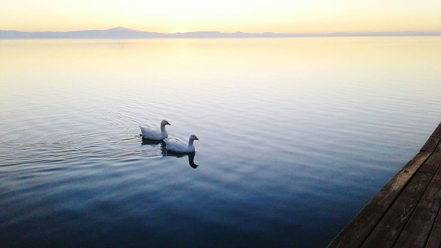 Geese swimming on lake against sky