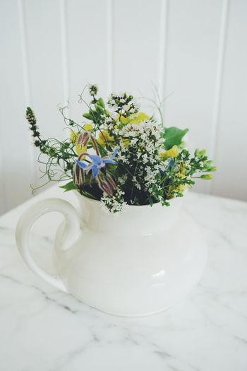 a bouqet of eatable flowers and herbs Flower Nature Indoors  Water Growth Day No People Fragility Close-up Freshness Borago Officinalis Borage Flowers Borage Officinalis Thyme Oregon Peas Flower Kale Flower Botanic Botanical Garden Botany Herbal Medicine Flower Head Botanical Book Herb Herbst