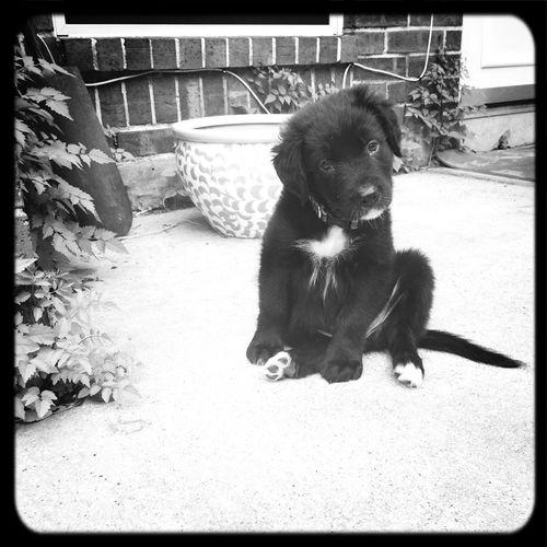 Hank as a puppy First Eyeem Photo