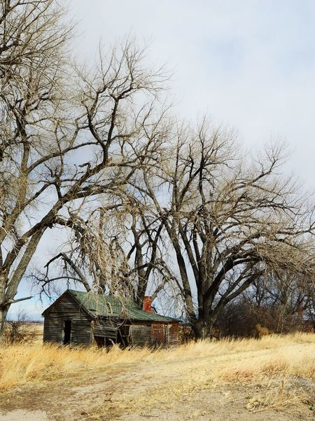 Old and abandoned on the edge of town Huntley Wyoming Bare Tree Building Exterior Built Structure House Landscape Outdoors Rural Scene