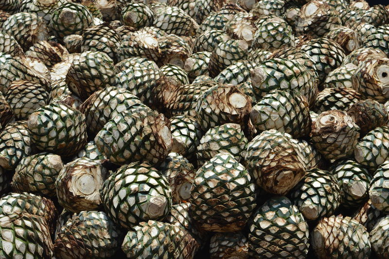 A pile of agave plants in a tequila factory in tequila, mexico