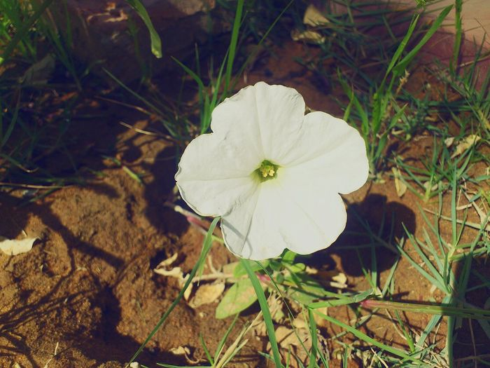 White Pure Beauty White Flower Nature