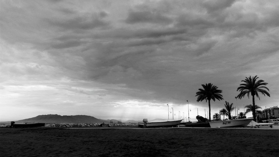 Palm trees by sea against cloudy sky