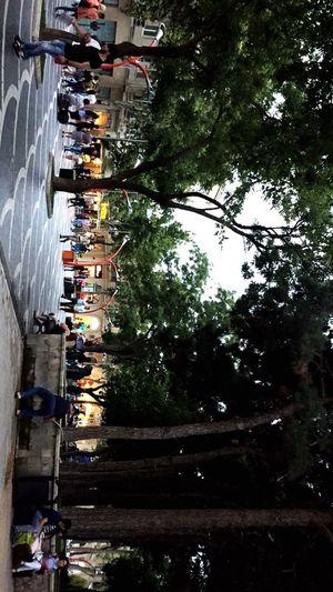 Baku Azerbaijan Tarqovu Park People Formula 1 Tree