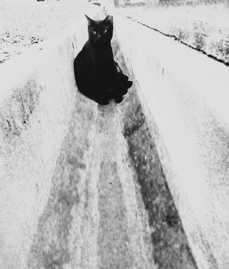 One Animal Pets Domestic Cat Feline Cat Felines Cats Of EyeEm Domestic Animals Outdoors Blackandwhite Photography Looking At Camera Black And White Black Cat Black Cat Photography