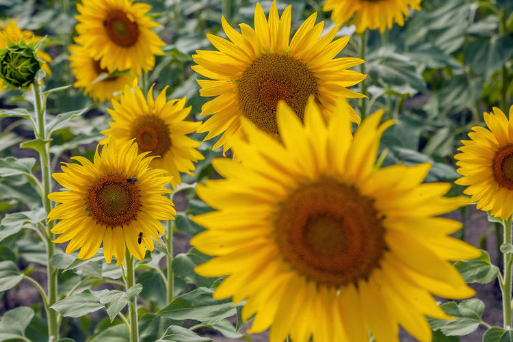 Flower Flowering Plant Yellow Fragility Freshness Flower Head Petal Vulnerability  Inflorescence Plant Growth Beauty In Nature Close-up Pollen Nature Sunflower No People Focus On Foreground Day Outdoors