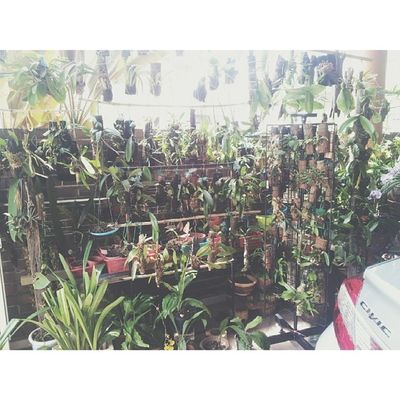 My bonda`s wild orchid collection