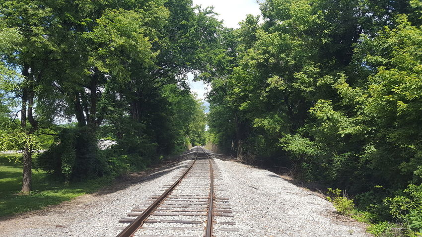 Tree The Way Forward Day Outdoors No People Kentucky  Paths Of Life Solitude My Point Of View Railroad Track
