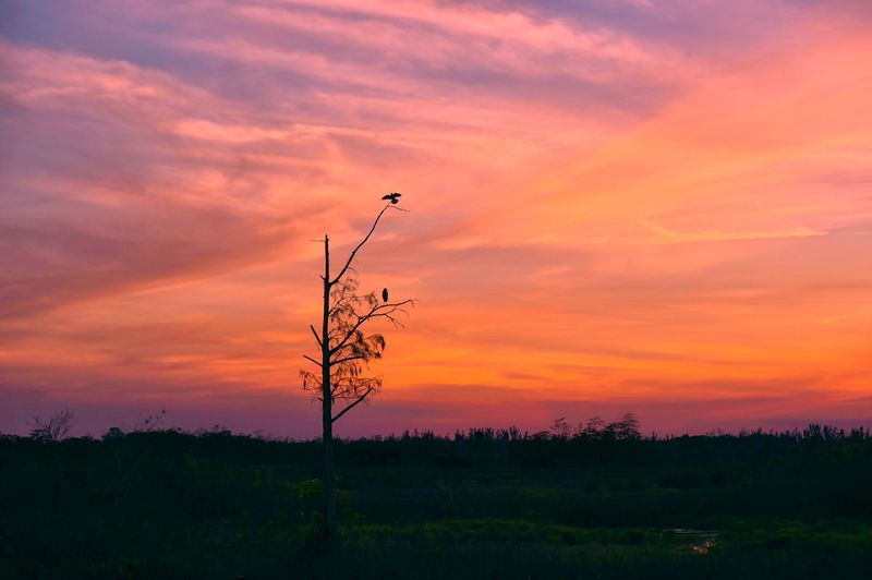 Silhouette tree on field against orange sky