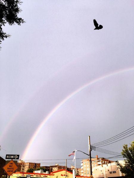 Rainbow Brooklyn After The Rain Birdinflight Sunset