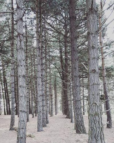 Wood Woods Tree