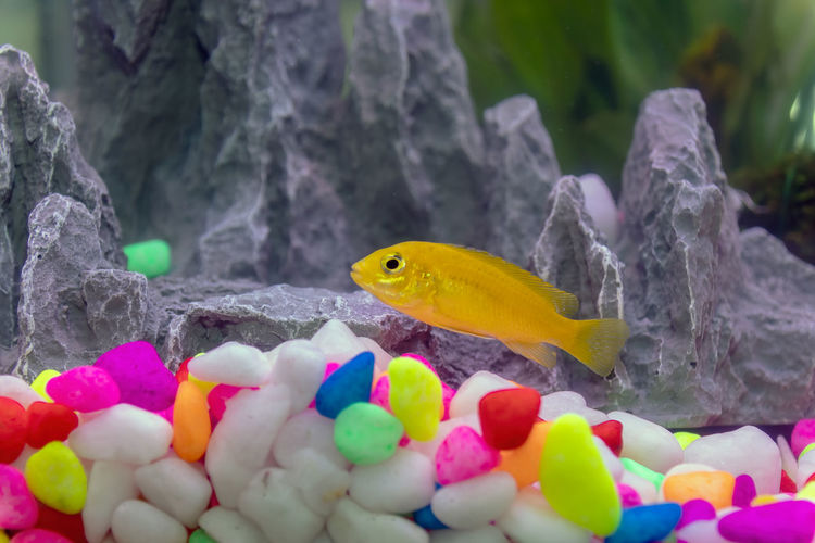 Close-up of multi colored fish in water