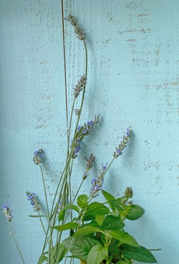 Lavender and mint flower bouquet in vintage blue wood background tranquility, relaxation health and wellness conceptual photography Green Color Plant White Color Close-up Purple No People Growth Day Leaf Flower Outdoors Fragility Nature Lavender Mint Tranquility Healthy Lifestyle Detox Ingredient Herb Food Stories