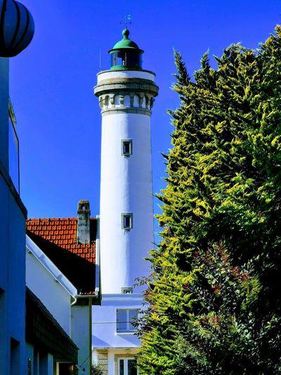 Lighthouse Tree