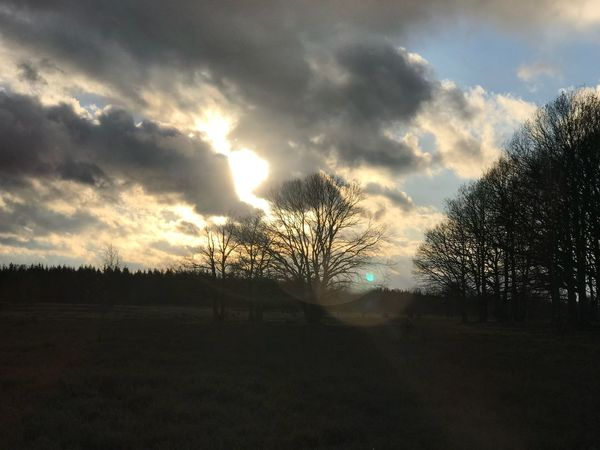 Lüneburger Heide Schneverdingen Tree Sky Landscape Nature Beauty In Nature Tranquility Silhouette Cloud - Sky Bare Tree Sunset No People Outdoors Day Scenics