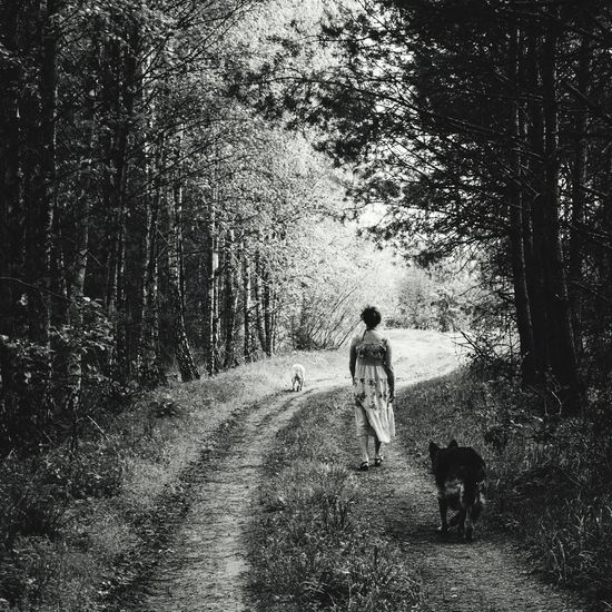 The Way Forward Rear View Walking Nature Walk Walkthroughthewoods Forest Path Forestwalk Stroll Through Nature Blackandwhite Photography Black&white Dogs And Their Owners MonochromePhotography Black And White Fresh On Eyeem  People And Places Monochrome Photography Women Around The World