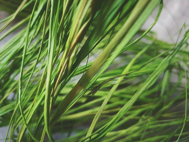 | Raffia | Poetry PatriziaPolese ArtWork Colorsplash Raffia EyeEmItaly Palm Tree Summer Close-up Green Color