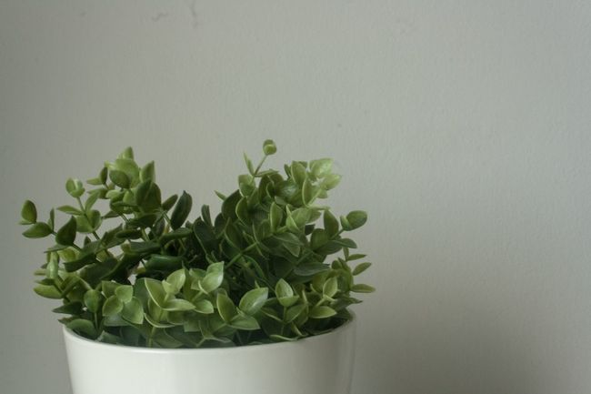 Srinakarin Green Color Table Indoors  Potted Plant Growth Plant No People Plant Part Leaf Nature Wall - Building Feature Close-up Copy Space Studio Shot Freshness Beauty In Nature Gray Houseplant Flower Flower Garden Flower Green