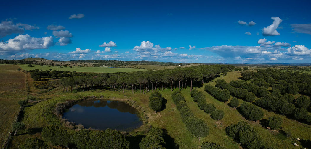 Aerial view from a lake surrounded by pine trees. Alentejo, Portugal Beauty In Nature Blue Cloud - Sky Day Environment Green Color Idyllic Laggon Lake Landscape Nature No People Non-urban Scene Outdoors Plant Scenics - Nature Sky Tranquil Scene Tranquility Water