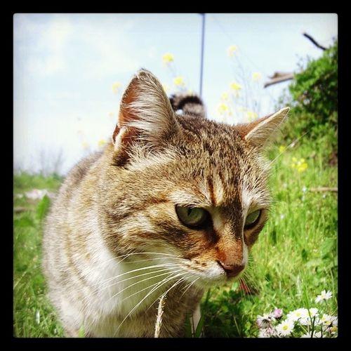 Cat Kedi Kocaman Istanbul turkey turkiye turchia terme objektifimden oan minasa manzara mutluluk animal