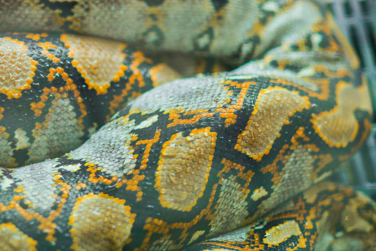 Close-up of yellow patterns on snake