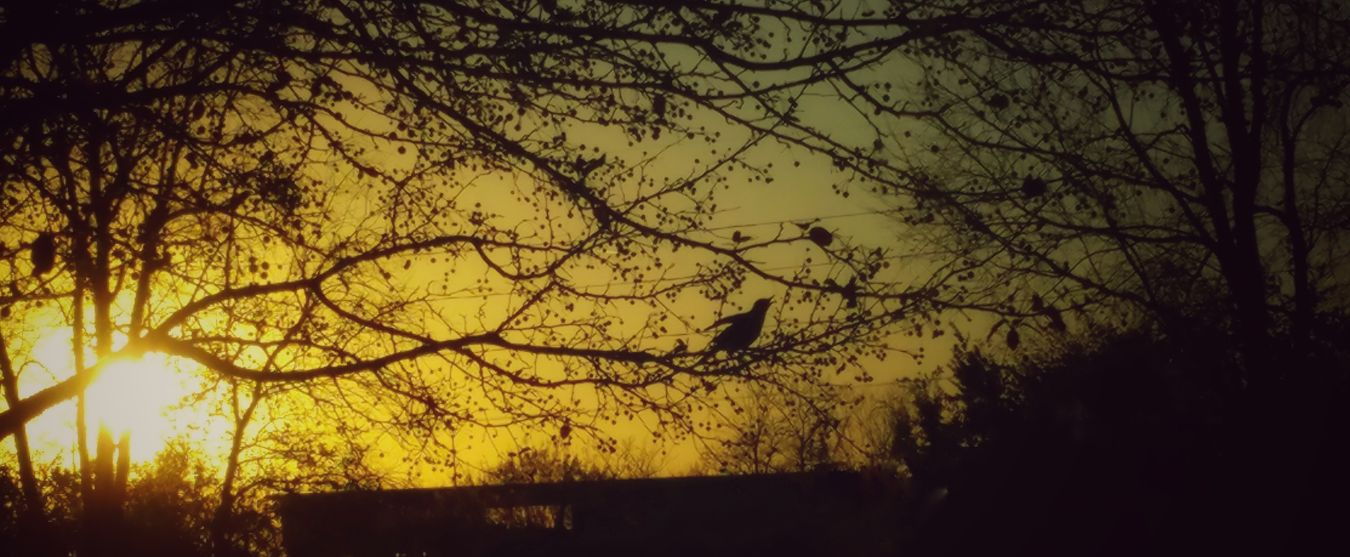 Sing Joyfully into the Night... Beauty In Nature Outdoors Silhouette Sunset No People Tree Sun LovetheSimpleThings EyeEm Nature Lover Nature Photography Nature_collection From My Point Of View Beautiful Taking Photos Enjoyinglife  Loveyourlife Sunlight Sunrise_sunsets_aroundworld
