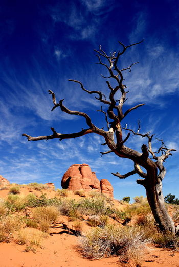 Bare tree and rock formation against sky at arches national park