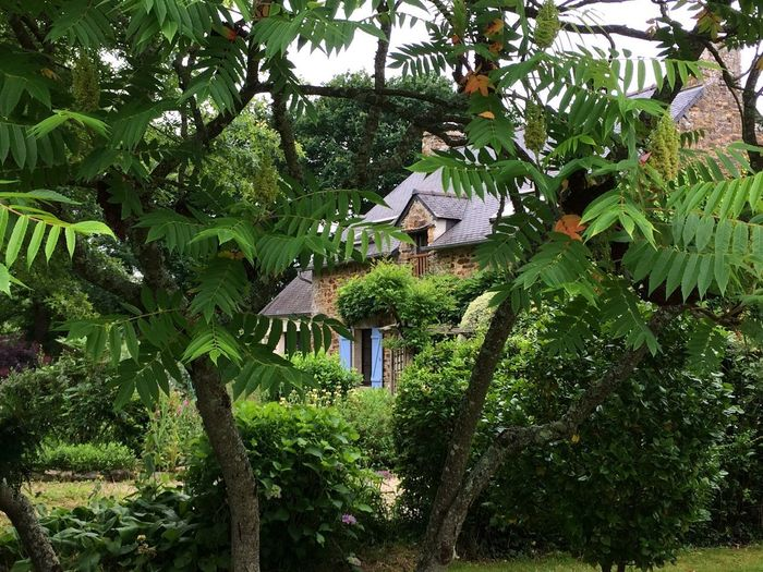Stone cottage through foliage in Breton garden Tree Plant Growth Green Color Nature Built Structure No People