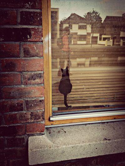 Dublin Cats