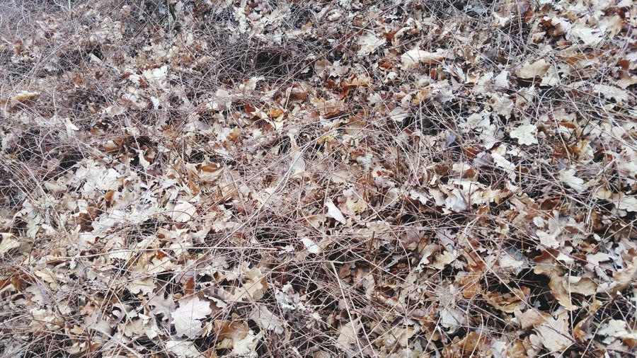 Dry Vegetation Nature Photography Fire Hazard Dried Leaves Life's End Dry Season Backgrounds Full Frame Pattern Abstract Close-up