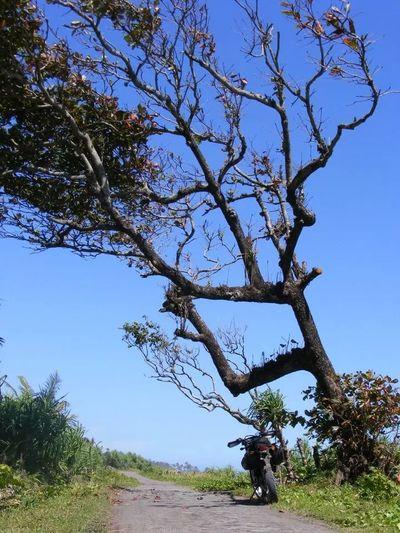 pesona jawa barat Hugging A Tree On The Road