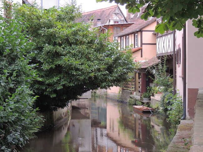 Alsace Architecture Building Exterior Built Structure Canal Day Footpath Green Color Growth House In Front Of Lush Foliage Narrow No People Outdoors Plant Residential Building Residential Structure Scenics Surrounding Tree Water Water Reflections Water_collection Watercity