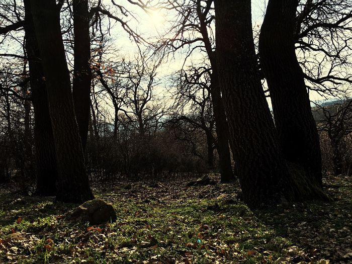 Forest Taking Photos Dark Darkness And Light Shine Sunrise