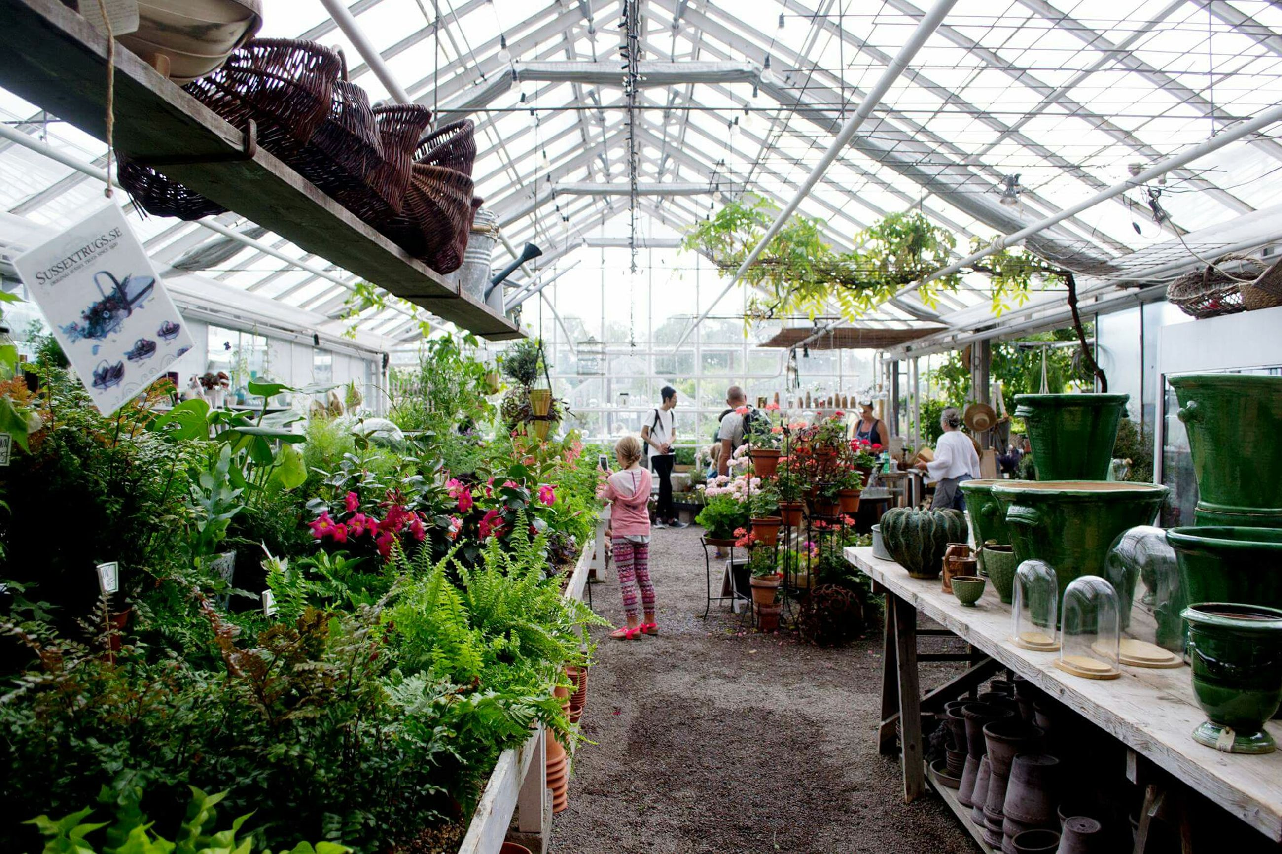 potted plant, plant, architecture, built structure, flower, growth, greenhouse, day, green color, nature, no people, the way forward, growing, fragility
