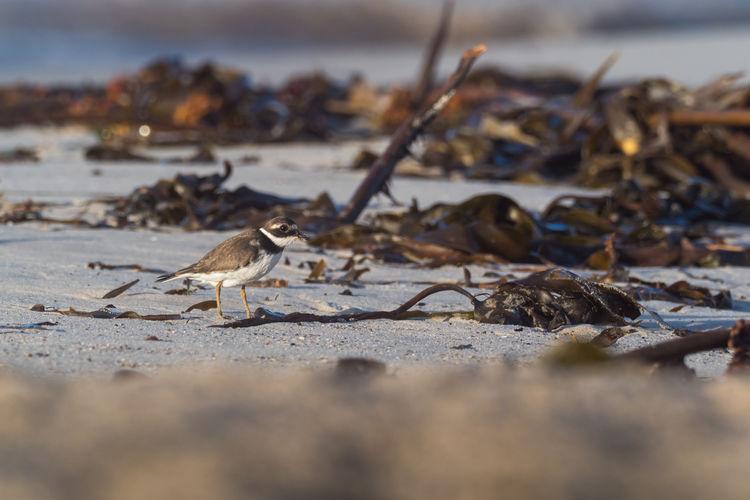 Close-up of bird on beach