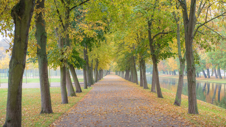 Autumn in city park Tree Plant Autumn The Way Forward Direction Treelined Footpath Diminishing Perspective Beauty In Nature Park Nature Tranquility Tranquil Scene In A Row Park - Man Made Space Scenics - Nature Change Day Leaf Tree Trunk No People Outdoors