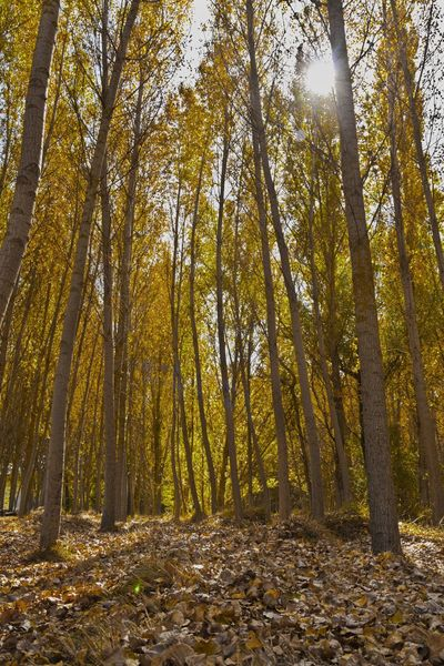 wood Nature Autumn Leaf Brown Colors Tree Forest Wilderness Area Autumn Tree Area Leaf Branch Sunlight WoodLand Tree Trunk