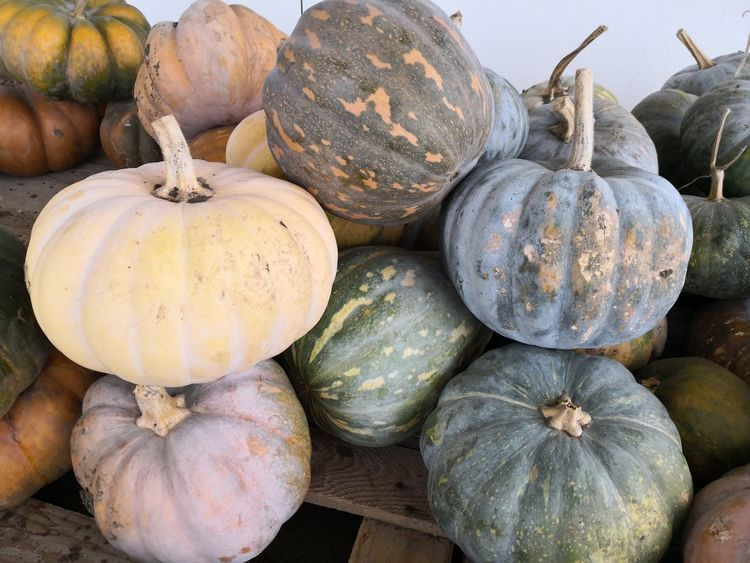 Pumpkins Pumpkin Patch Pumpkin EyeEm Selects Sicily ❤️❤️❤️ Sicilia Zucca Biological Food Ciboitaliano Cibosano