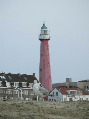 Beachphotography Beach Birds Animals Lighthouse