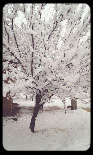 Snow Friday Winter Cold #days #quiet
