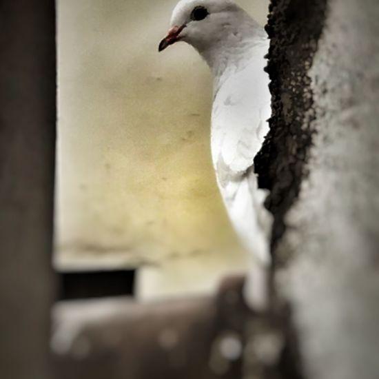 #bird #wild #wildlife #feather #beak #fauna #snow #pattern #nature #fur #background #zoo #feathers #decoration #white #tagency paz