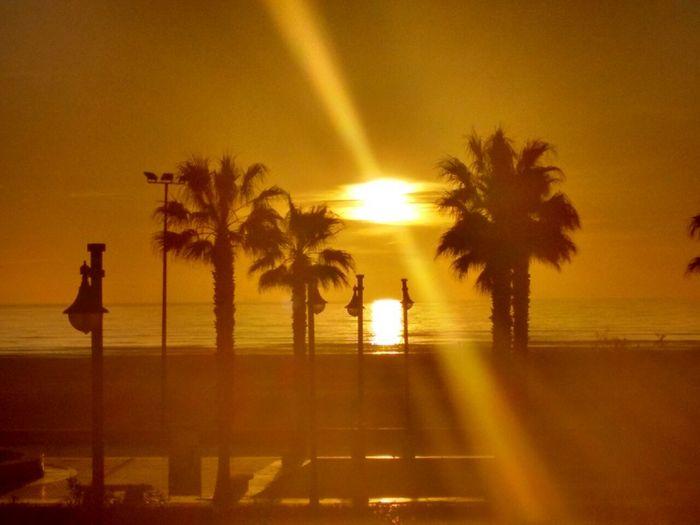 🌅. Enjoying The Sun Surfing Being A Beach Bum Sea Relaxing Beach Palm Trees Beautiful Paisaje Moments
