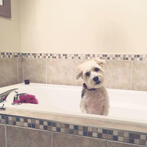 Portrait Of Dog Sitting In Bathtub