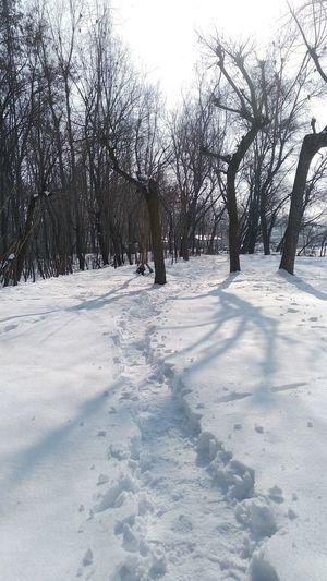 snow Tree Snow