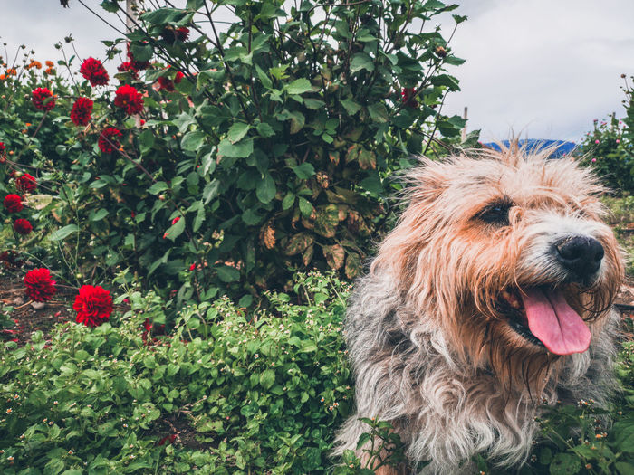 Close-up of dog looking away by plants