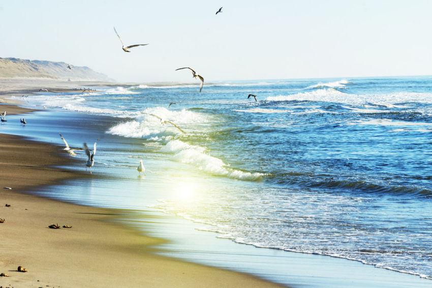 Seagulls fishing on the Beach in Denmark Gulls And Sea Animal Animal Themes Animal Wildlife Animals In The Wild Beach Beauty In Nature Flying Gul Gull Horizon Horizon Over Water Land Motion Scenics - Nature Sea Sky Water Wave