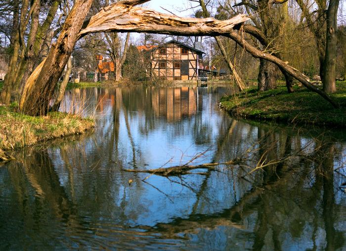 Park Oliwski w Gdańsku Architecture Building Gdansk Park Parkoliwski Poland Reflections Reflections In The Water Tree The Architect - 2017 EyeEm Awards