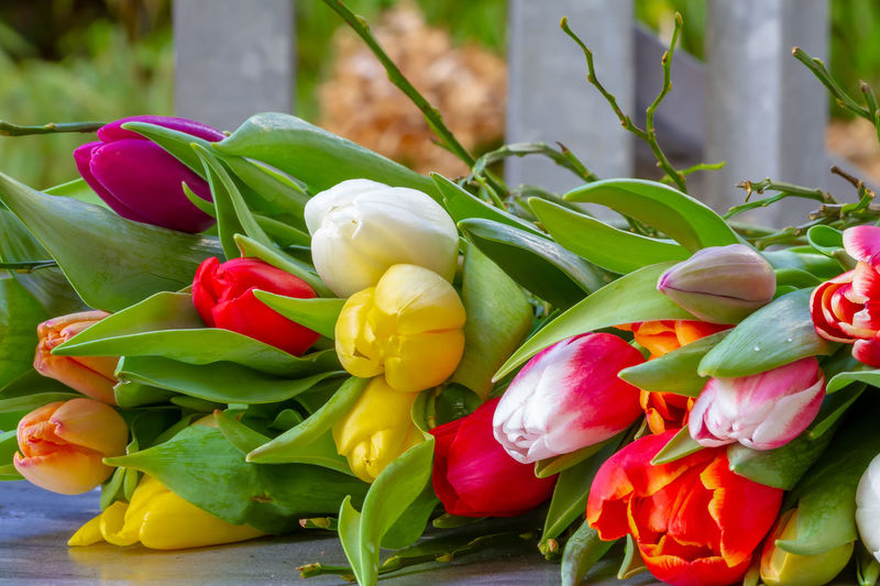 Colorful boquet of tulips Plant Flower Nature Flower Head Tulips Flower Bouquet  Boquet Garden Florist Floristry Colorful Valentine's Day  Valentine Mixed Age Range Decoration Birthday Present Gift Flowers Springtime Season  Dutch Amsterdam Netherlands
